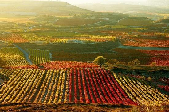 Viñedo de La Rioja. Imagen tomada de: capitalespanoladelagastronomia.es/